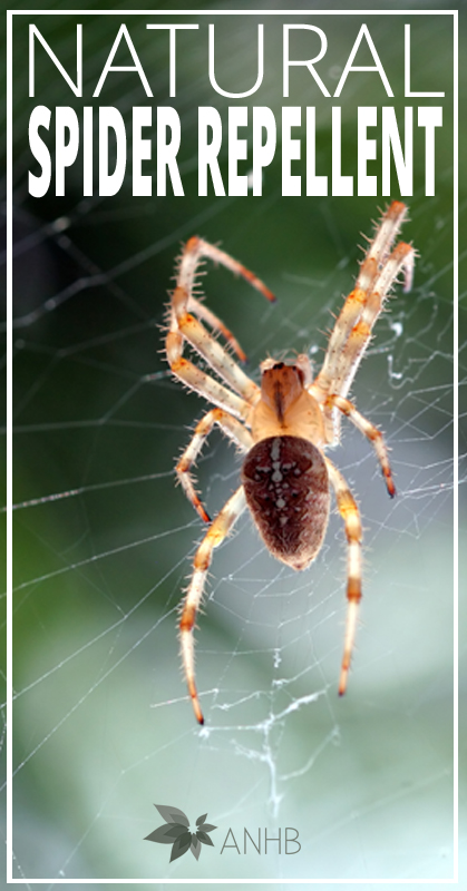 Natural Spider Repellent - All Natural Home and Beauty