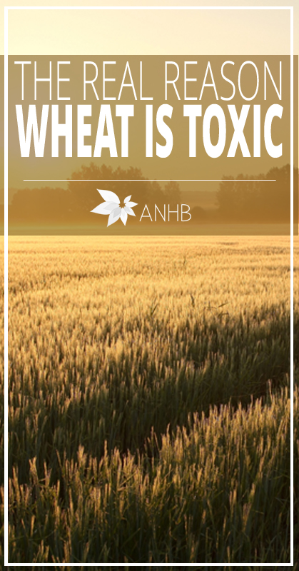 The Real Reason Wheat is Toxic - All Natural Home and Beauty