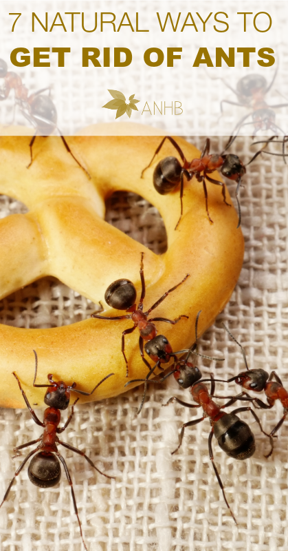 7 Natural Ways to Get Rid of Ants - All Natural Home and Beauty #pestcontrol #natralhealth #naturalliving